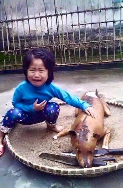 Việt Nam chung tay ký tên bảo vệ loài chó, chấm dứt nạn ăn cắp, buôn lậu chó mèo